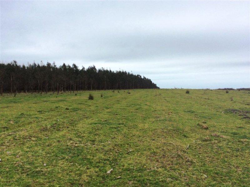 Symons Property, Musselroe Road, Musselroe Bay, Tas 7264