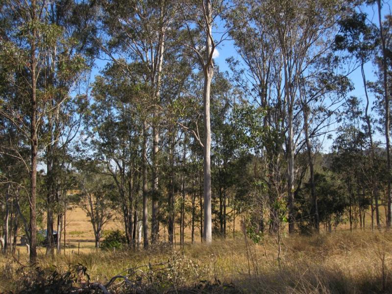 Lot 4 Carey Street, Bonalbo, NSW 2469