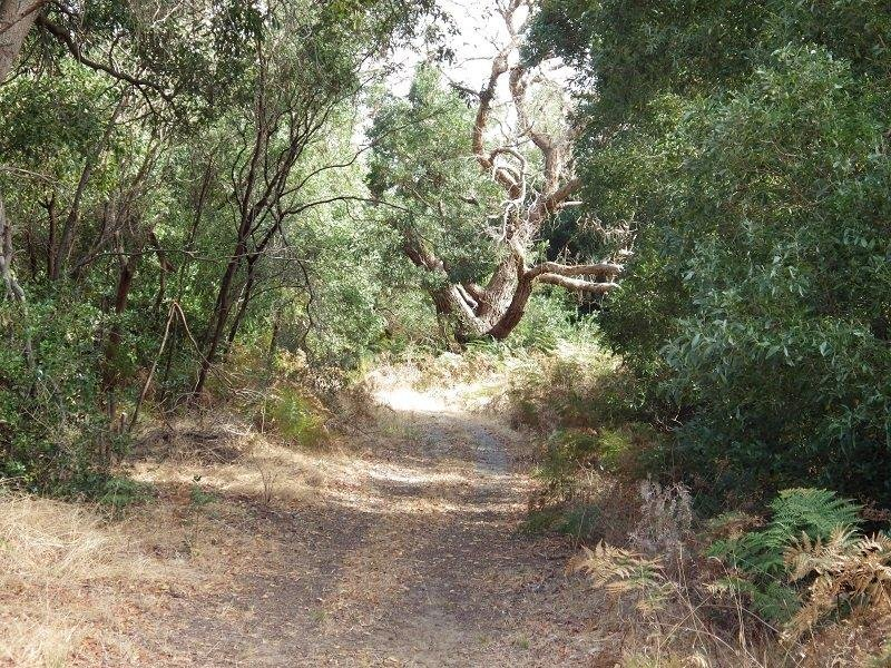 Manuka Road, Hatherleigh, SA 5280