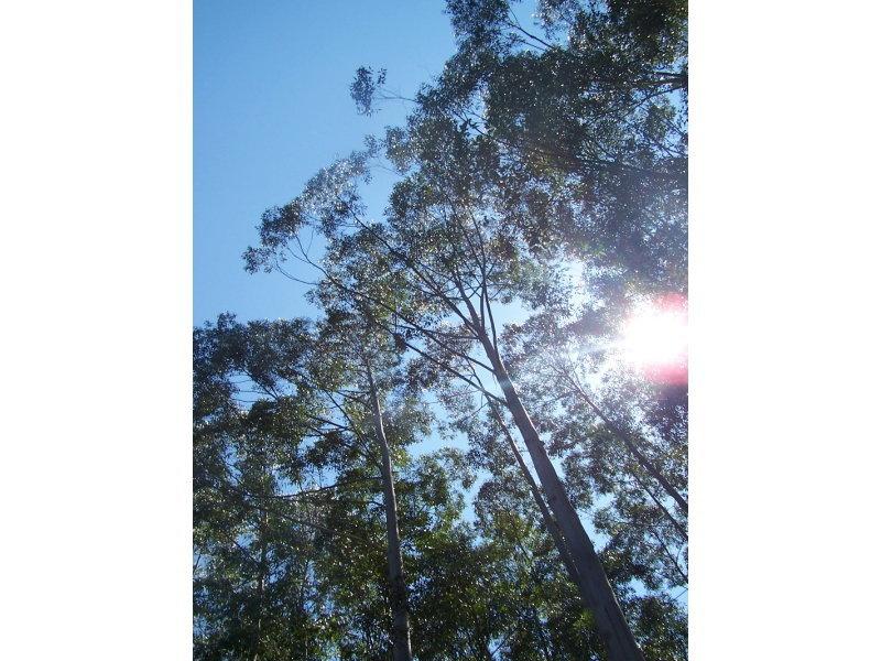 Lot 9 Candoormakh Creek Road, Nabiac, NSW 2312