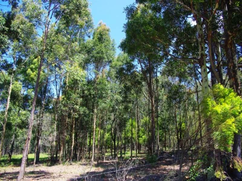Lot 262 Nutleys Creek Road, Bermagui, NSW 2546