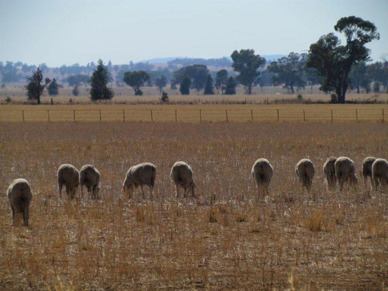 12 Brolgan Road, Parkes, NSW 2870