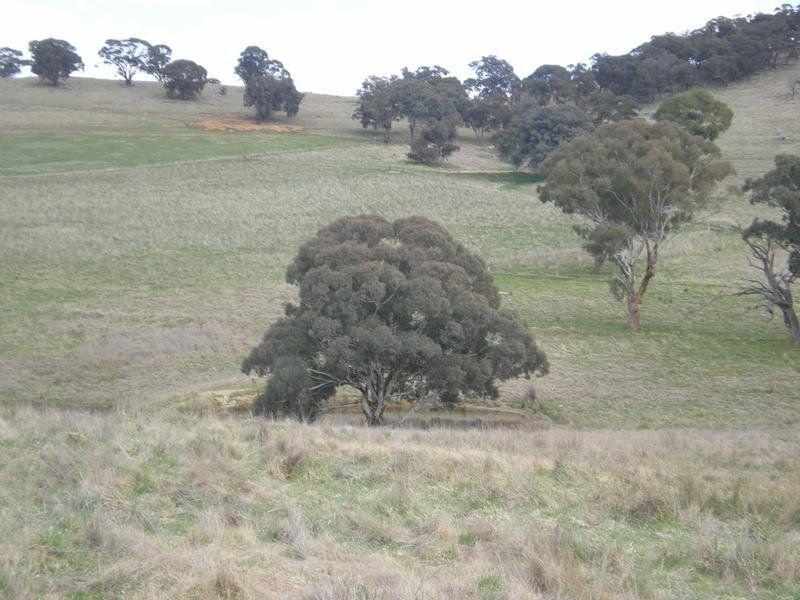 - Emu Swamp Road, Lucknow, NSW 2800
