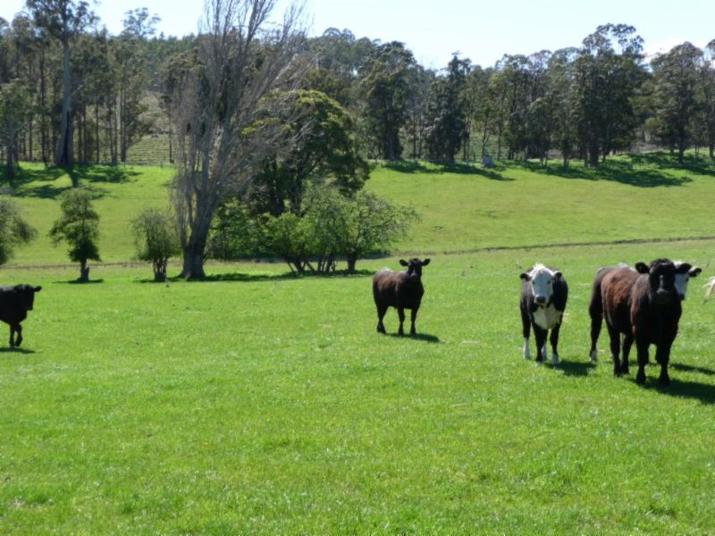 Address available on request, Blessington, Tas 7212