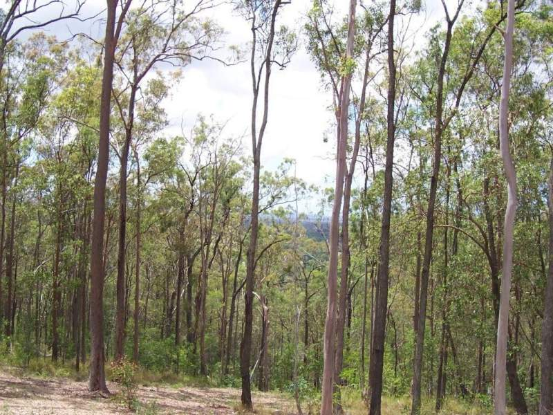 Lot 10 Grange Country Estate, Willow Vale, Qld 4209