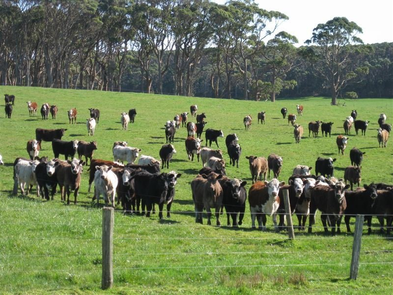 1000 Acres Linnanes Road, Redpa, Tas 7330