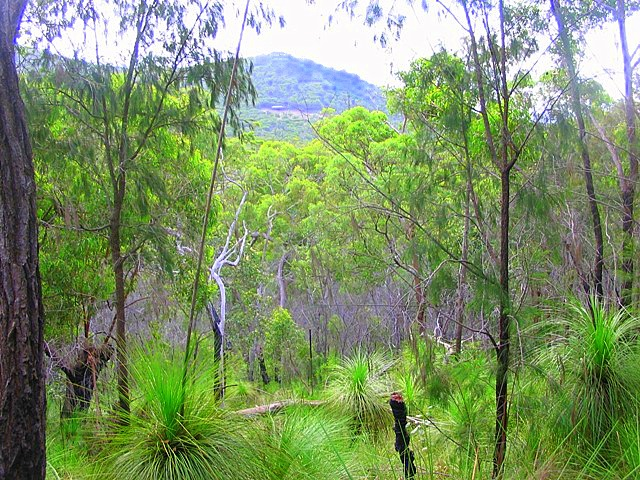 lot 340 Streeter Drive, Agnes Water, Qld 4677