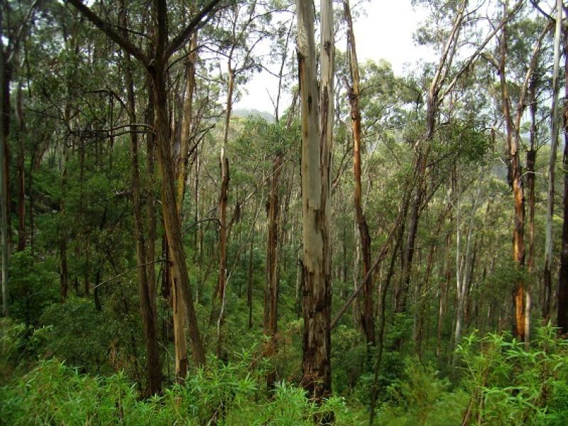 LOT 196 MT DARRAGH ROAD, Wyndham, NSW 2550