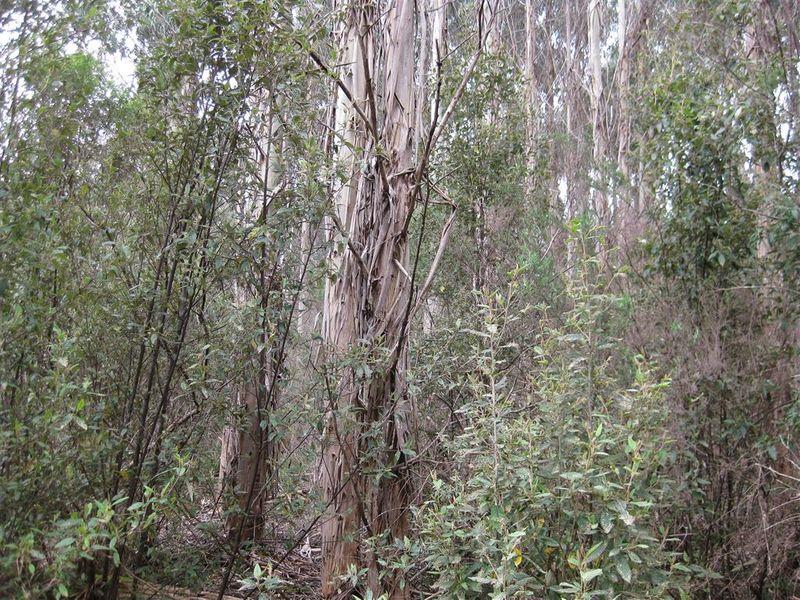 . Meryanna Road, Trowutta, Tas 7330