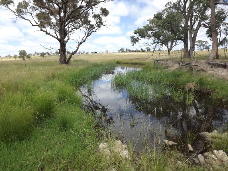 Benbraggie, Deepwater, NSW 2371