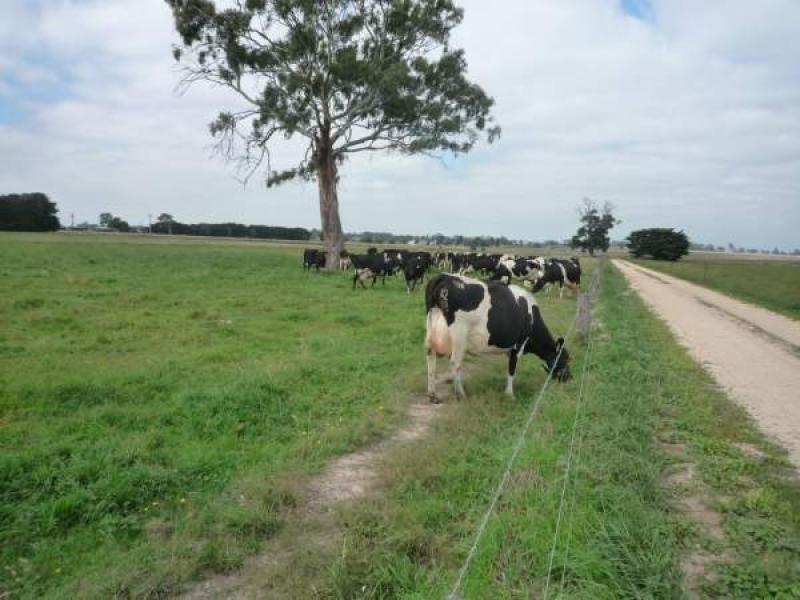 - Cowwarr Weir Road, Cowwarr, Vic 3857