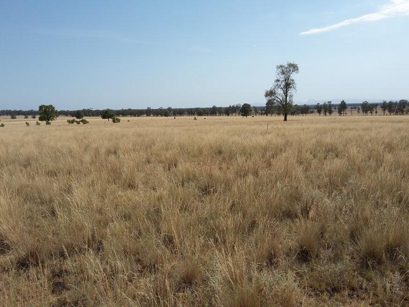 Part Weenoona, Gilgandra, NSW 2827