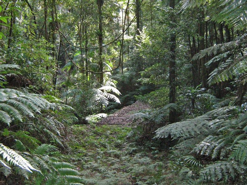 1411 Kalang Road, Bellingen, NSW 2454