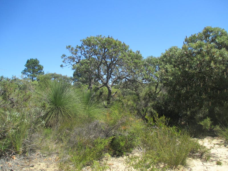68 Banksia Way, Lancelin, WA 6044