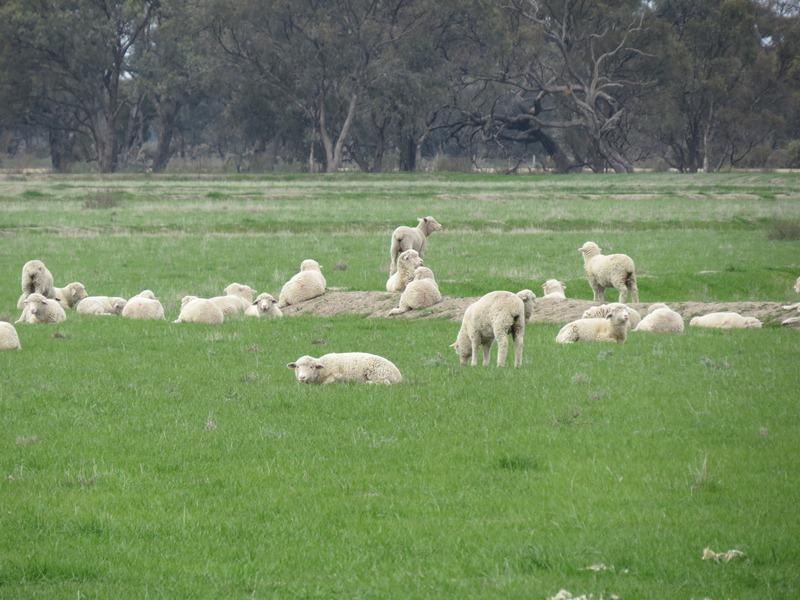 """Lynore"" Wakool Road, Barham, NSW 2732"