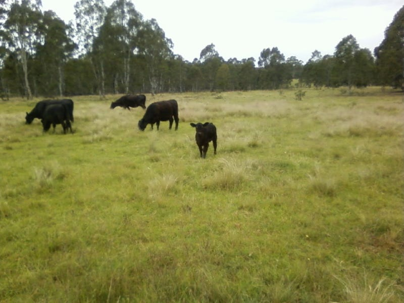 763 Jerrara Road, Marulan, NSW 2579
