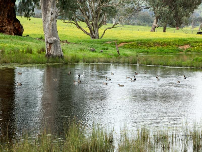 1319 Murray River Road, Talgarno, Vic 3691