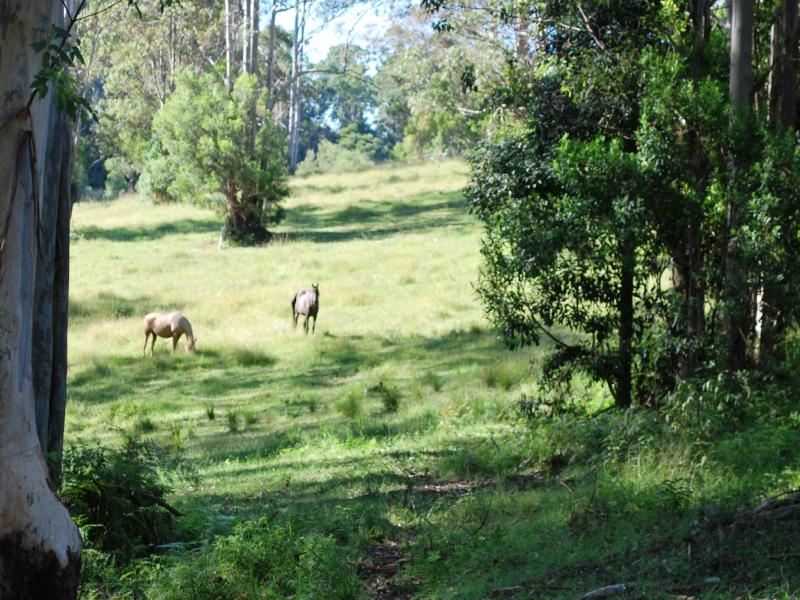 100 Camp Creek Road, Lowanna, NSW 2450