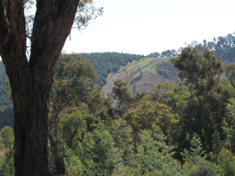 550 Vokins Creek Road, Holbrook, NSW 2644