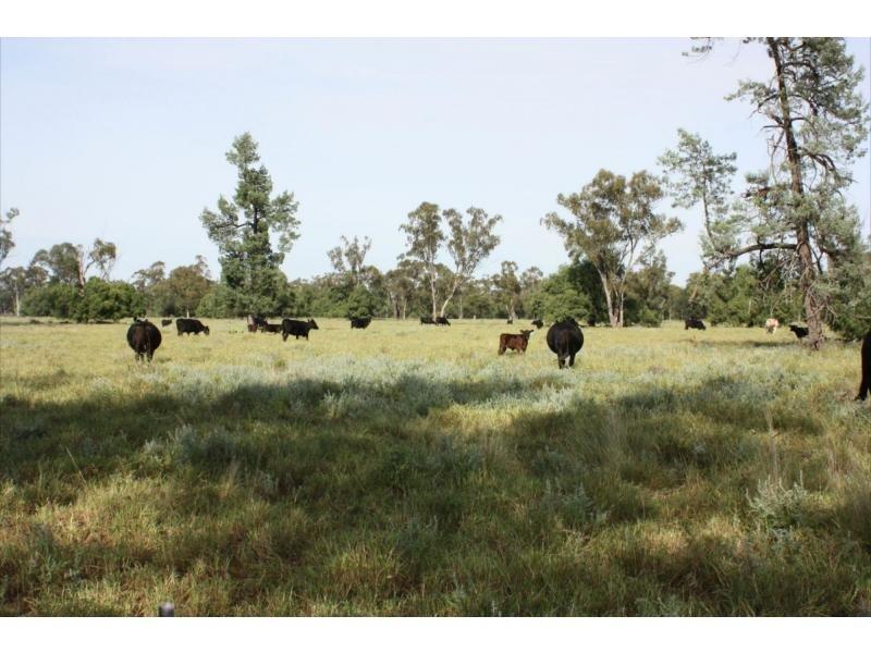 Gungalman Road, Carinda, NSW 2831