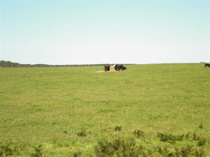 . Limestone Coast Road, Cape Jaffa, SA 5275