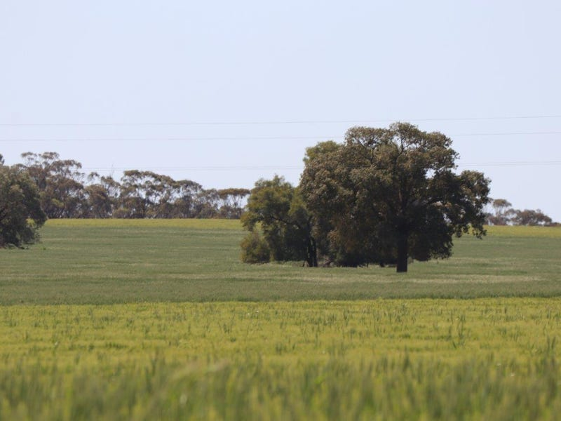 1440 Dundas Road, Weethalle, NSW 2669