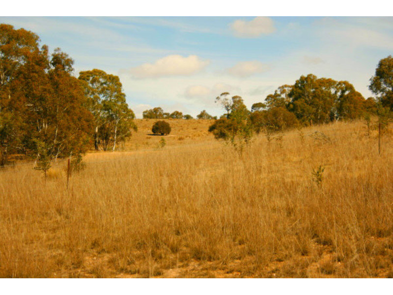 Tredegar Road, Bombala, NSW 2632