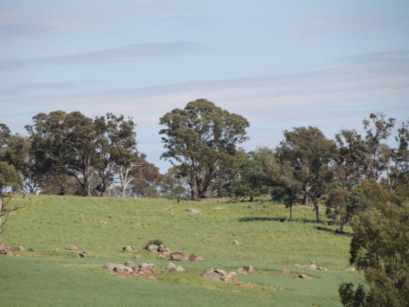Lot 1 Tanah Merah Road, Wombat, NSW 2587