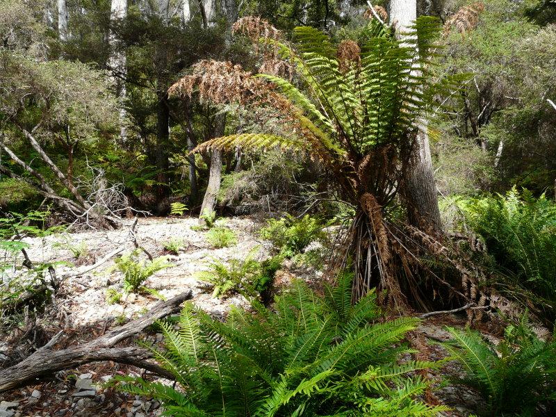 Lot , 5351 Tasman Highway, St Helens, Tas 7216
