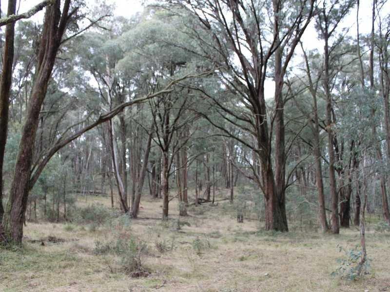 Lot 4 Moody's Hill Road, Tumbarumba, NSW 2653