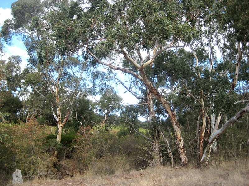 Sec 191 Off Ansell Road, Mount Jagged, SA 5211