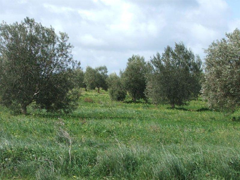 44 Olive Road, Bowmans, SA 5550