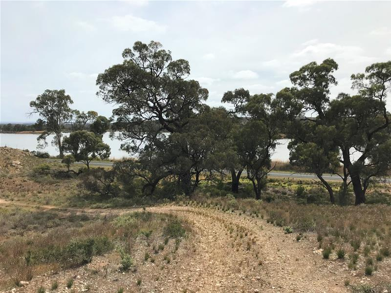 Section 501 East Front  Road, Younghusband, SA 5238