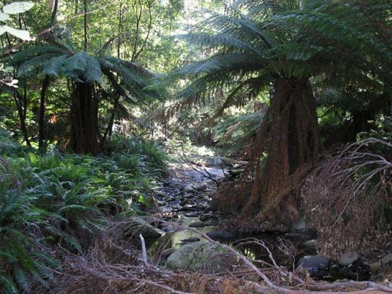 Lot , 130 Wilkins Road, Chain Of Lagoons, Tas 7215