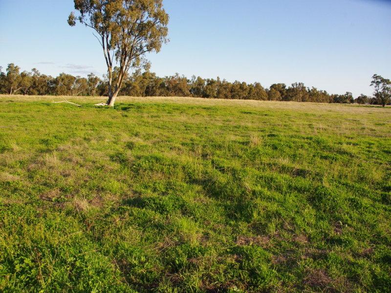 5L Gilgandra Road, Brocklehurst, NSW 2830