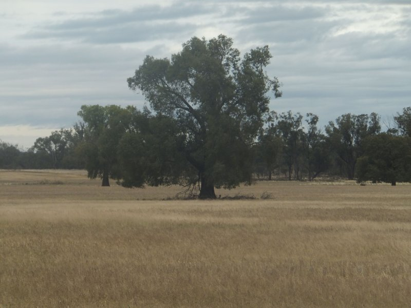 - Bonnie Doon, Barmedman, NSW 2668