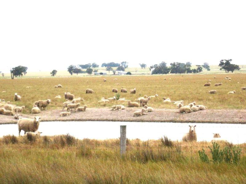 . Carramar / Yarrawonga Road, Mulwala, NSW 2647