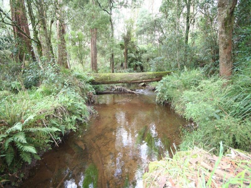 148 Cherry Lane, Toolangi, Vic 3777