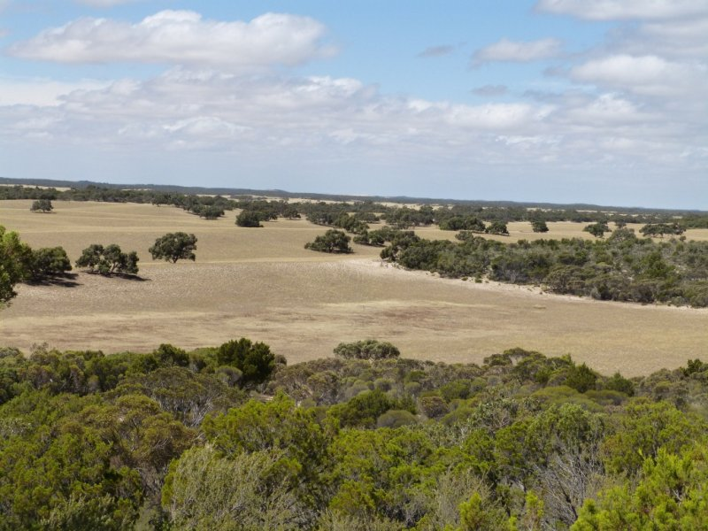 1845 Pinnaroo-Bordertown Rd, Pinnaroo, SA 5304