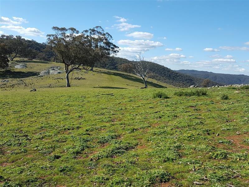 176 Beechworth Road, Hargraves, NSW 2850