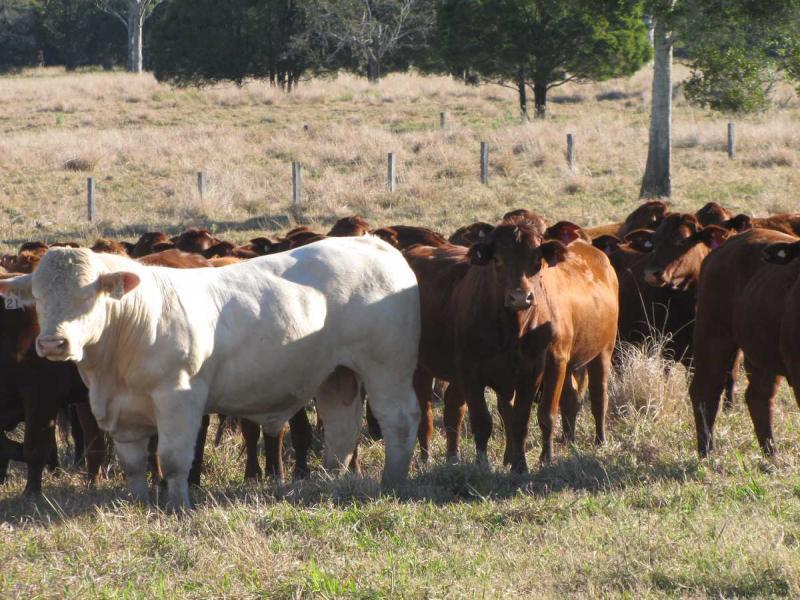 35 Tomki-Tatham Road, Clovass, NSW 2480
