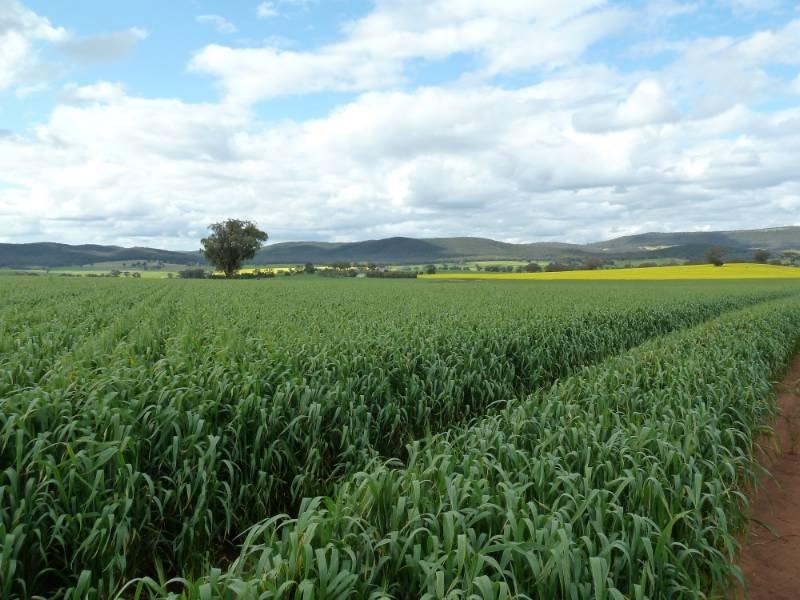 "1 ""Willow Farm"", Mandagery, NSW 2870"