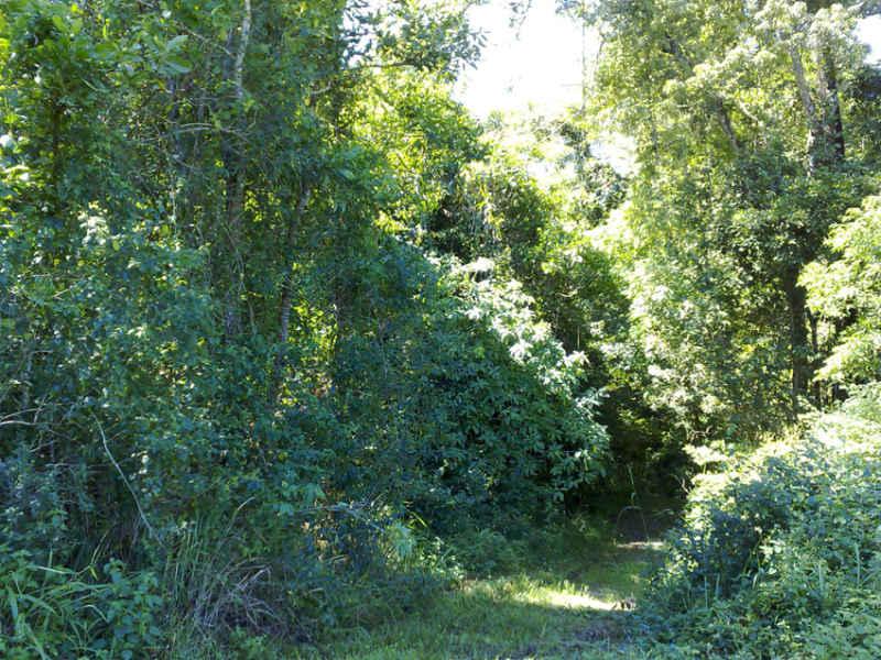 lot 3 cnr Nazzari Rd & Hawkins Creek Rd, Hawkins Creek, Qld 4850