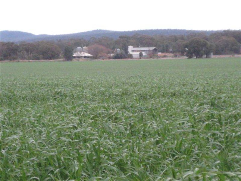 Woronora Mid Western Hwy, Rankins Springs, NSW 2669