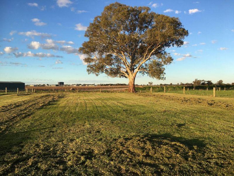 49 Cabernet Drive, Moama, NSW 2731
