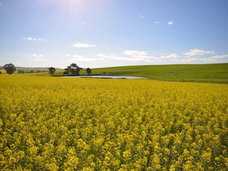"""EAST FARM"" Lallys Road, Hill River, SA 5453"
