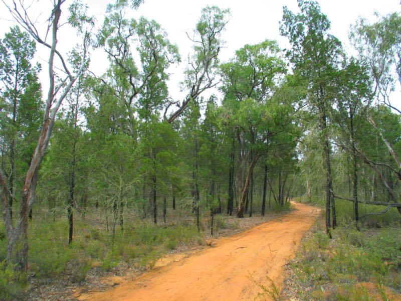 41 Baan Baa Road, Baan Baa, NSW 2390