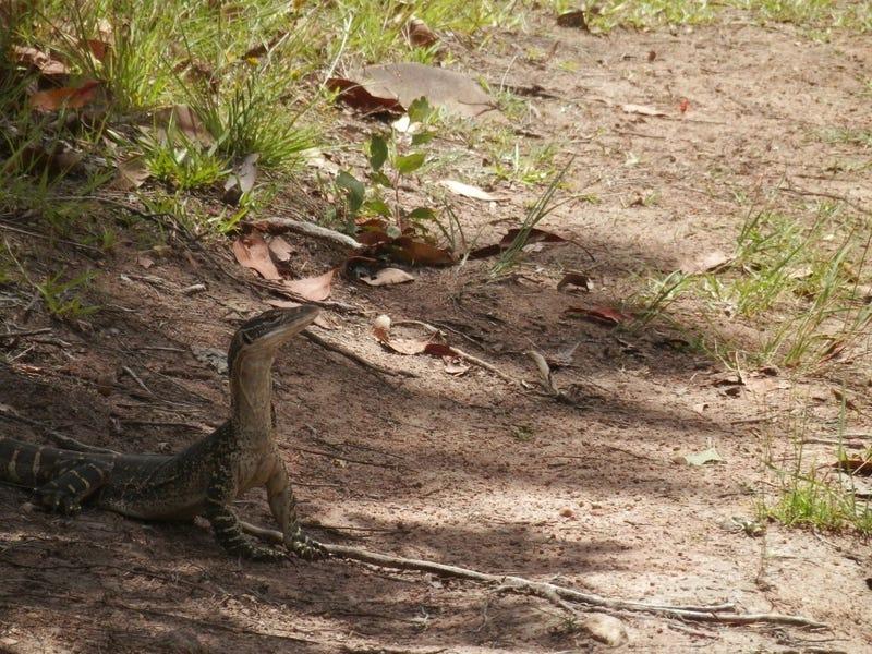 471 Paddys Flat Rd, Tabulam, NSW 2469