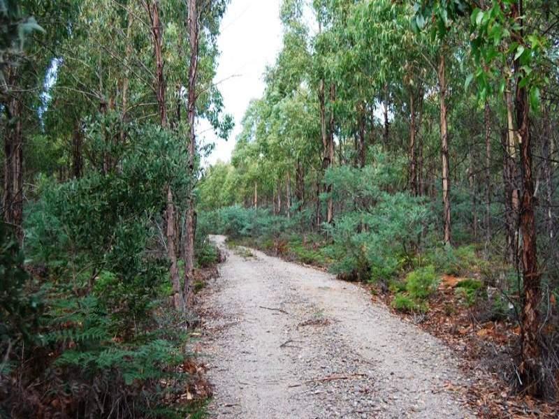 Grubbs Road, Reedy Marsh, Tas 7304