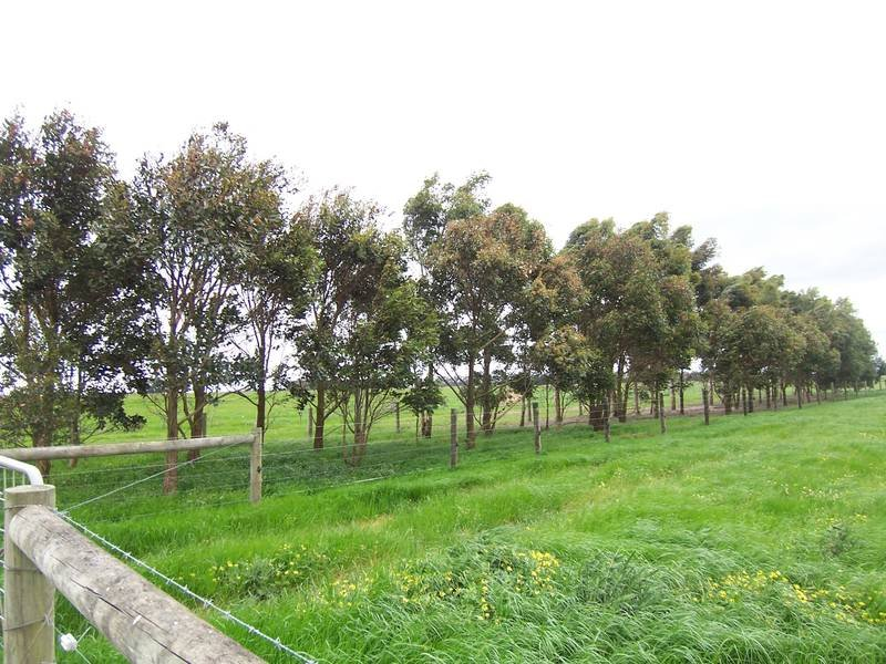 Cnr. Tapps Lane & Slaughteryard Road, Terang, Vic 3264